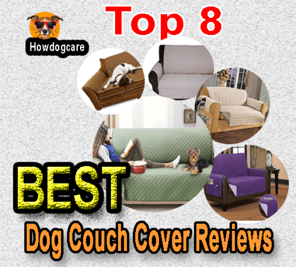 Top 8 Best Dog Couch Cover Reviews Best Top Care With Dogs