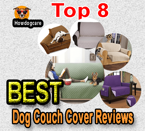 So, Why Do You Need To Use A Dog Couch Cover For Dogs?