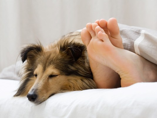 impact of dog sleeping in bed