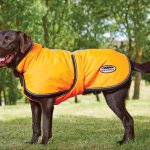 Best Large Dog Coats for Winter