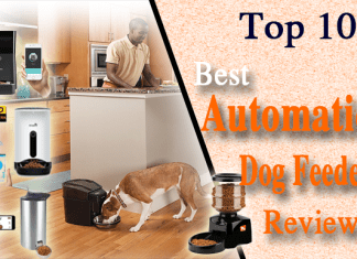 10 Best Automatic Dog Feeder Reviews 2019