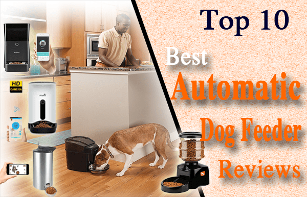 Best Automatic Dog Feeder Reviews
