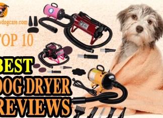 Best Dog Dryer