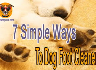 7 Simple Ways To Dog Foot Cleaner