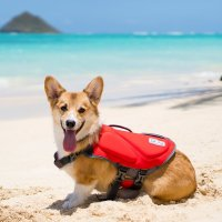 Collection Small Dog Life Jacket Pictures - Best Fashion ...