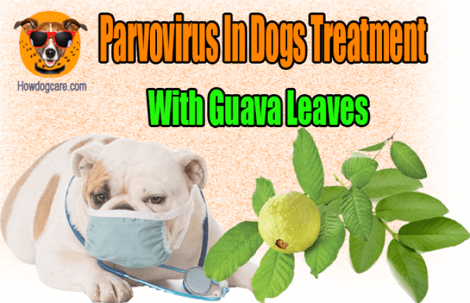 Parvovirus In Dogs Treatment With Guava Leaves