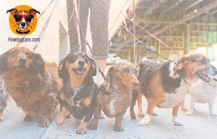 Prevent Puppies From Getting Diarrhea By Walking