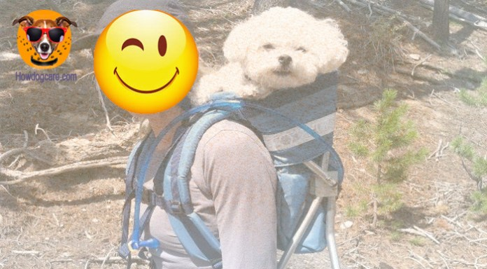 Backpack for dogs are made of soft fabrics