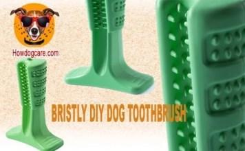 BRISTLY DIY DOG TOOTHBRUSH