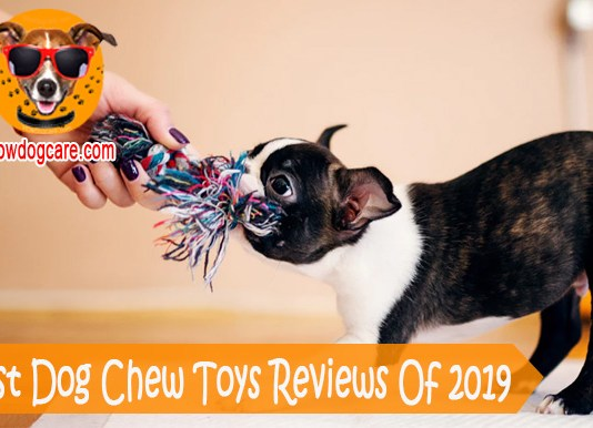 18 Best Dog Chew Toys Reviews Of 2019