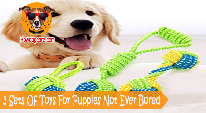 3 Sets Of Toys For Puppies Not Ever Bored Best Top Care With Dogs