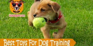 Best Toys For Dog Training