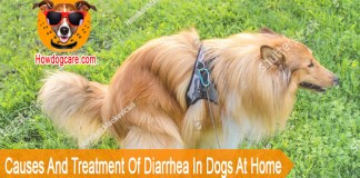 Causes And Treatment Of Diarrhea In Dogs At Home