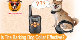 Is The Barking Dog Collar Effective?