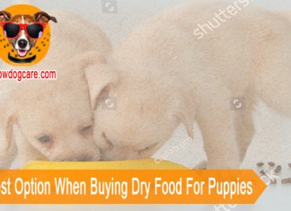 The Best Option When Buying Dry Food For Puppies