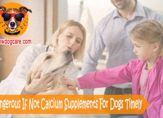 Very Dangerous If Not Calcium Supplements For Dogs Timely