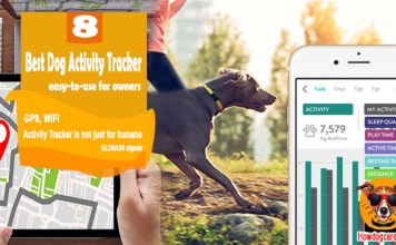 Best Dog Activity Tracker For easy-to-use Owners