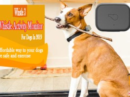 Whistle Activity Monitor For Dogs Review 2019