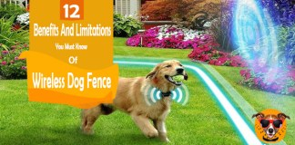 Wireless Dog Fence: 12 Benefits And Limitations You Must Know