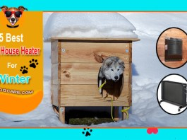 Best Dog House Heater For Winter Dog House Upgrades