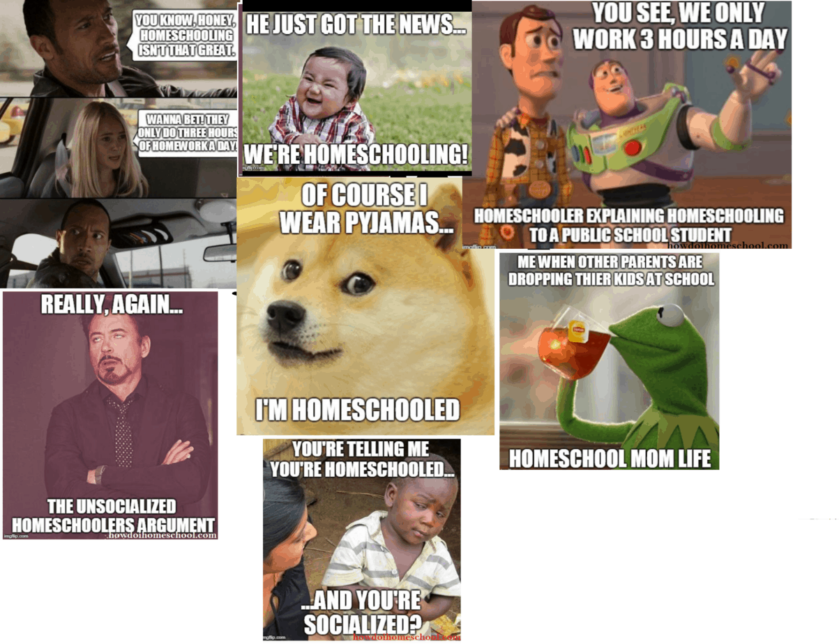 Homeschool Meme Alert Funny Homeschool Memes To Keep You In Stitches