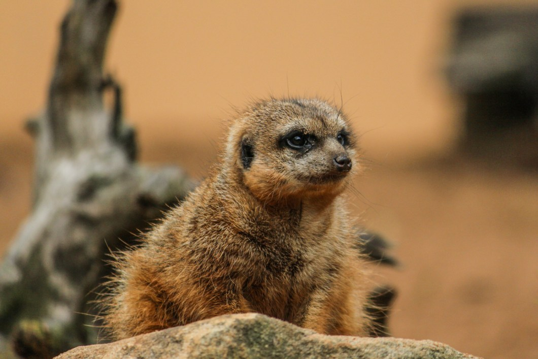 Taronga Zoo Sydney | How Far From Home