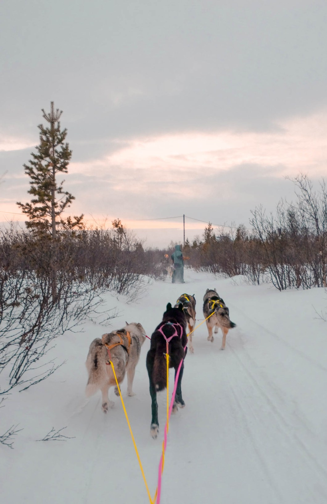 Dog mushing in cold Norway