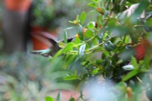 Koliber w ogrodzie botanicznym
