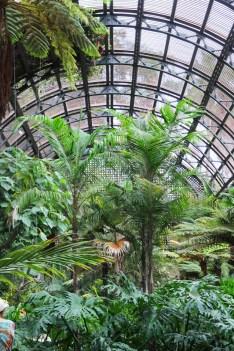 Ogród botaniczny w Balboa Parku