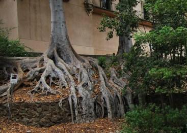 Zoro Garden – korzenie drzew figowych