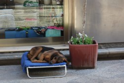 Psy w Trapani – kolejna odsłona