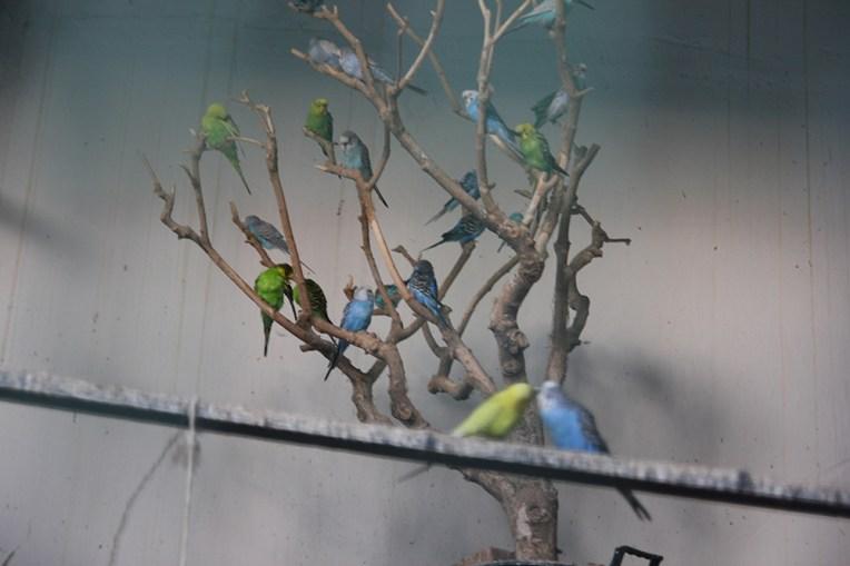 Papużki w Villa Margherita