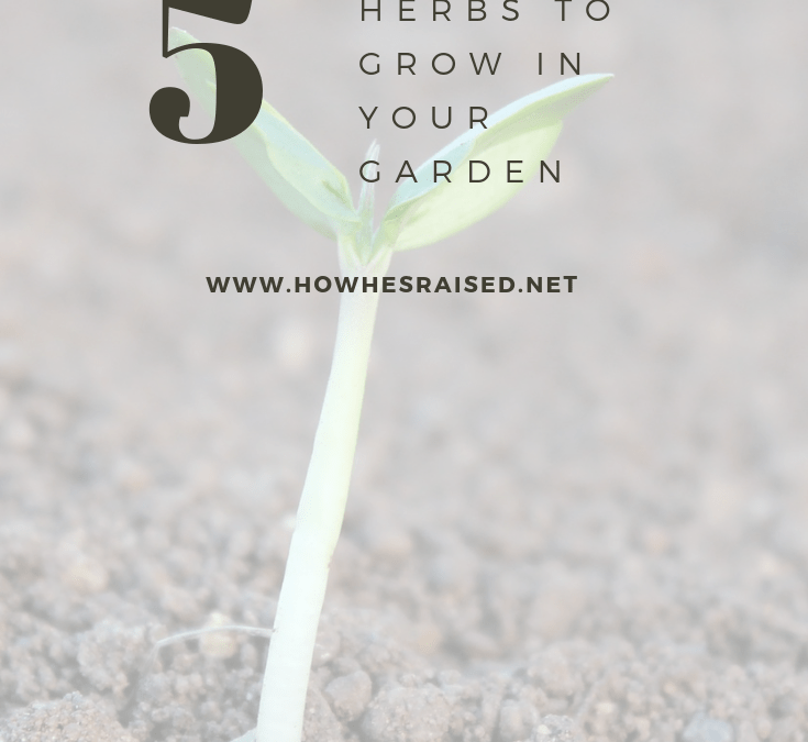 5 Herbs to Grow in Your Garden This Spring
