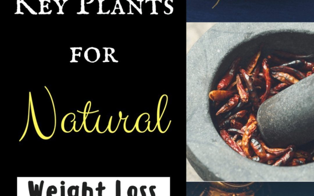 Herbs: Key Plants for Natural Weight Loss