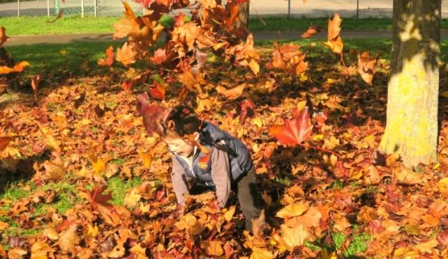 jouer-avec-la-nature-lancer-feuilles-automne