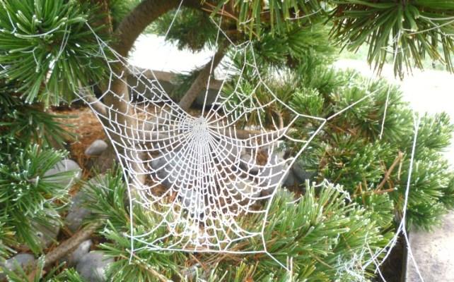 jouer-avec-la-nature-toile-araignée-gelée