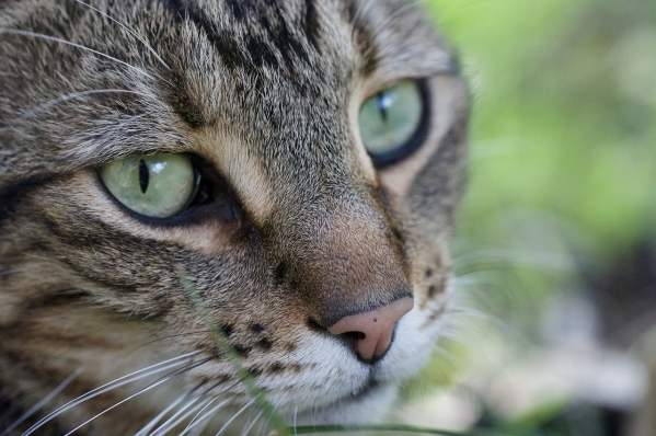 cats 2019111202 - 30+ the Most Beautiful Cats Image