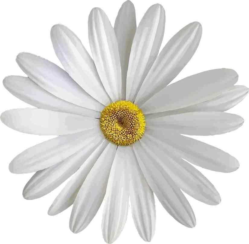 Daisy Tattoo 2020062809 - The Best Daisy Tattoo Ideas and Meaning