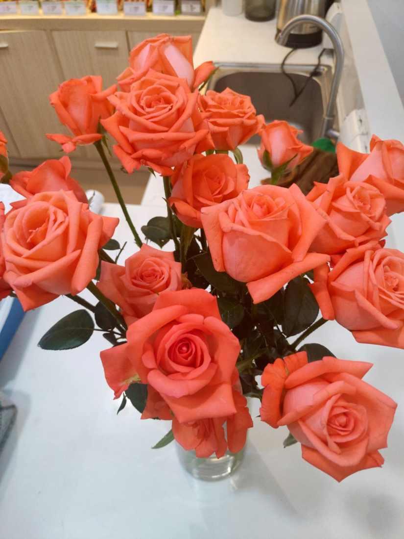 Orange Rose 2020070701 - 11 Most Beautiful Orange Roses and Meaning