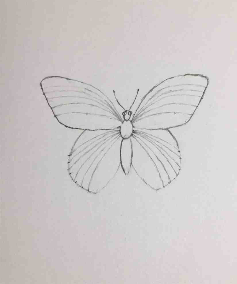 Draw a Butterfly 2020092306 - How to Draw a Butterfly-Step by Step Tutorial