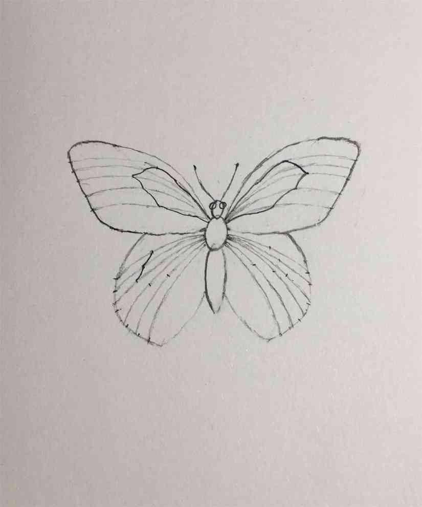 Draw a Butterfly 2020092307 - How to Draw a Butterfly-Step by Step Tutorial
