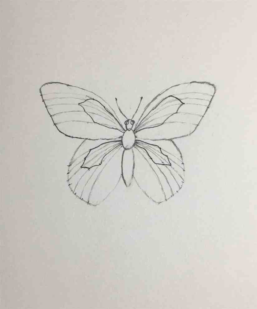 Draw a Butterfly 2020092308 - How to Draw a Butterfly-Step by Step Tutorial