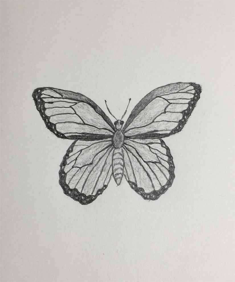 Draw a Butterfly 2020092311 - How to Draw a Butterfly-Step by Step Tutorial
