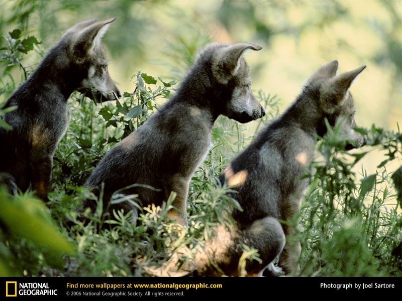 Awesome Cute Couples Wallpapers October 2010 Howling For Justice