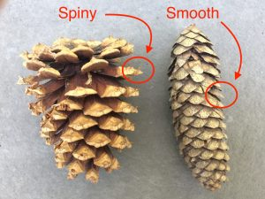Squirrel feeder cone comparison