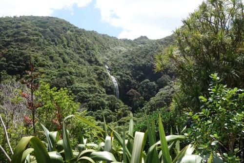 Karekare waterfall and bush