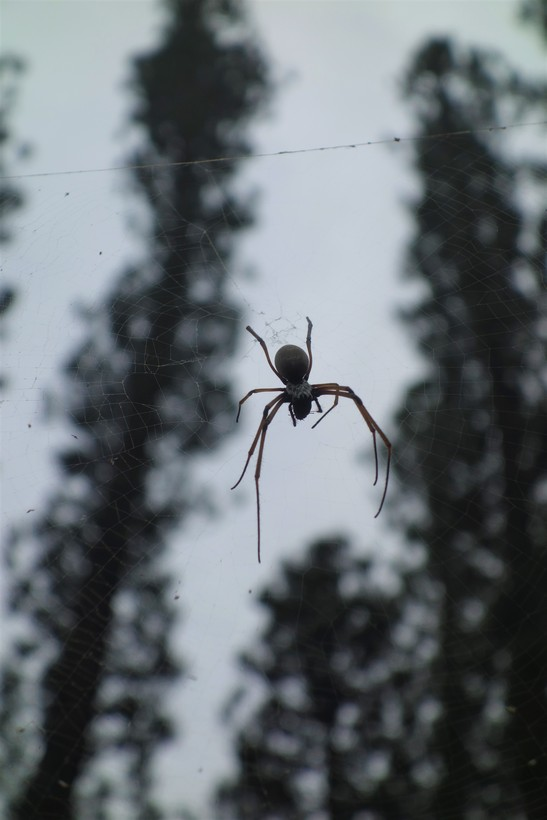 Spider on Passage Rock walk