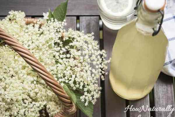Elderberry flower syrup – for immunity and lemonade