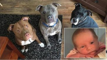 Week-Old Baby Dies In Dog Attack