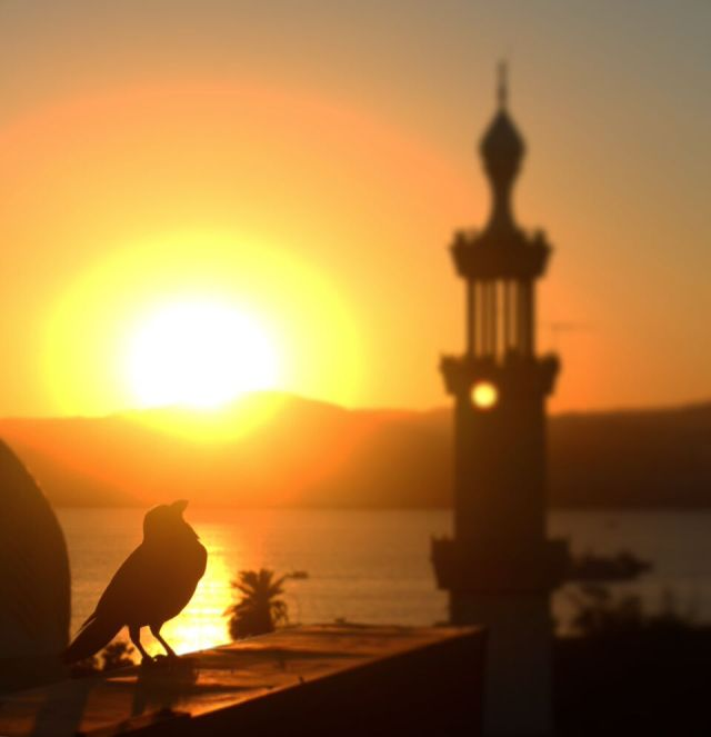 sunset aqaba jordan mosque bird silhoette